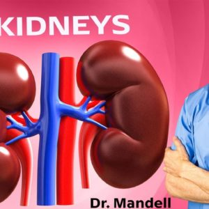 1 Cup Will Tell Your KIDNEYS to Never Give Up | Dr Alan Mandell, DC